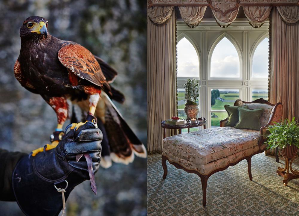 birdroom.jpg