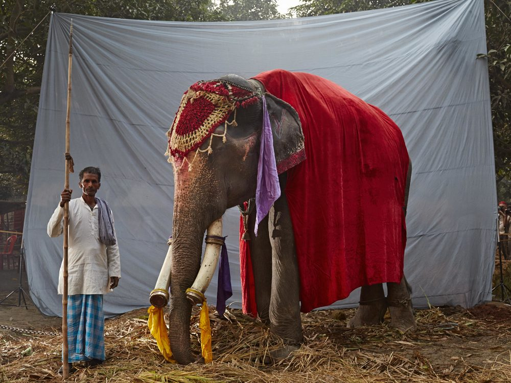 Elephant_1_3_B6C7166.jpg