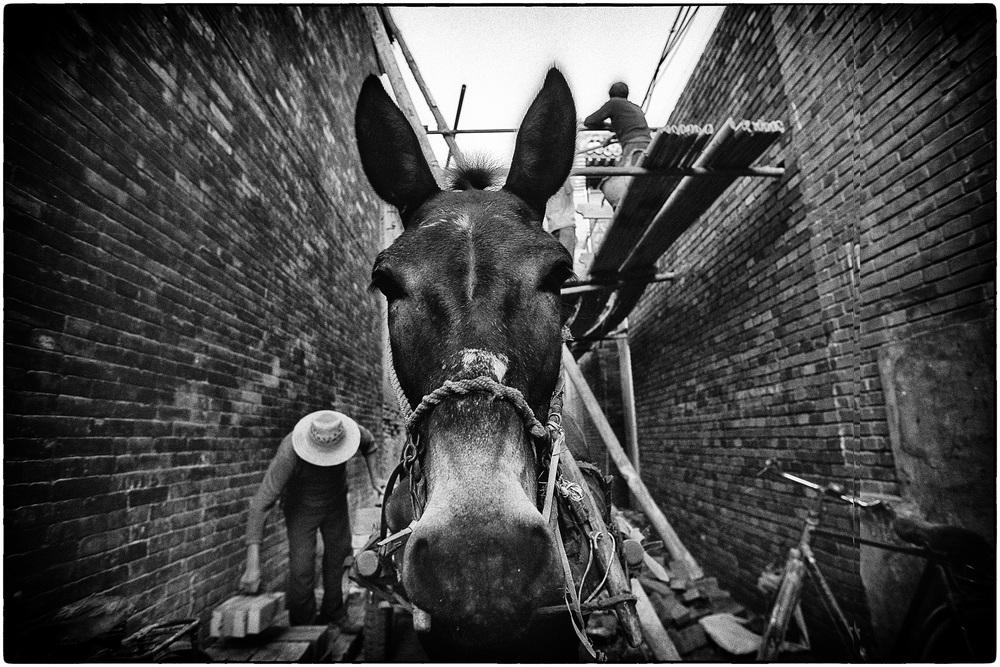 horsecont.jpg