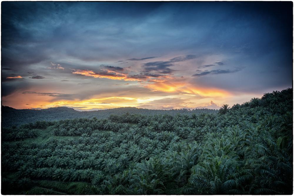 Landscape05.JPG