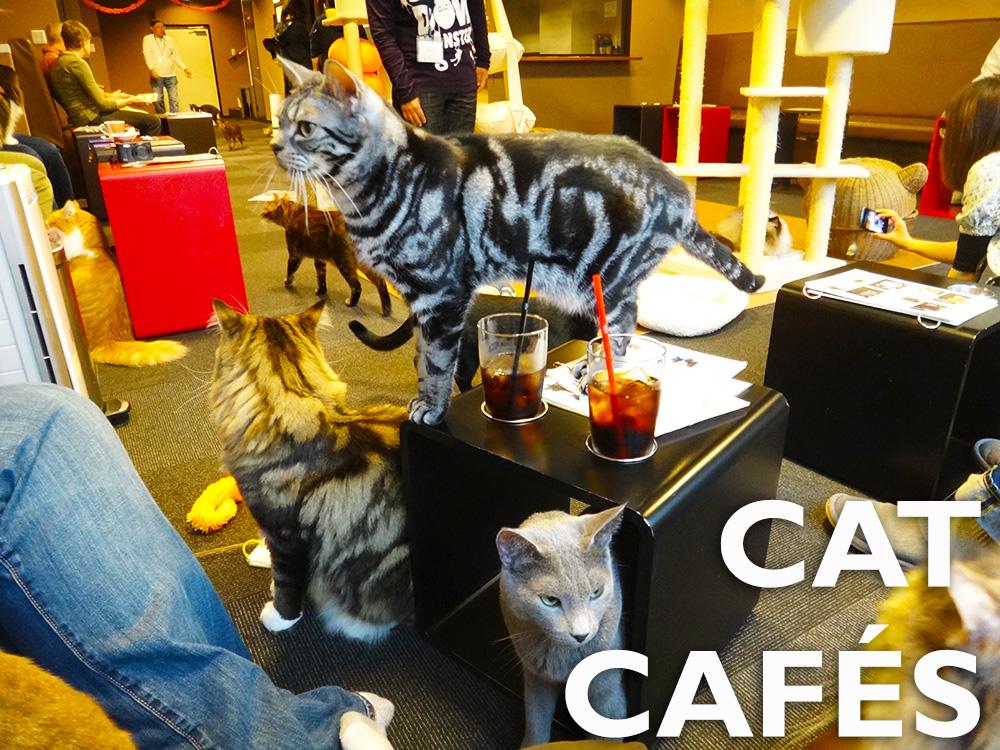 Japlanning 101 - Cat Cafes