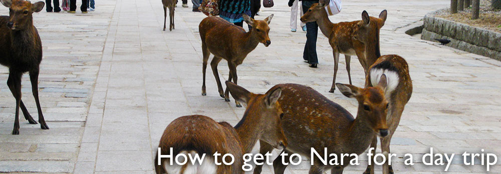 How to get to Nara for a day trip