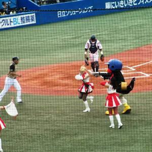 Baseball Tokyo Japan Yakult Swallows