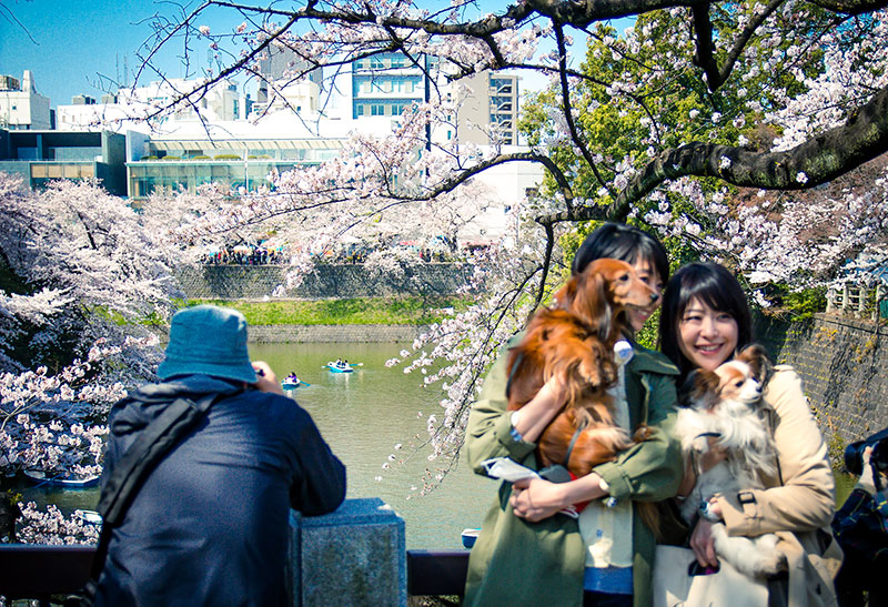 DOGS AT PALACE SAKURA