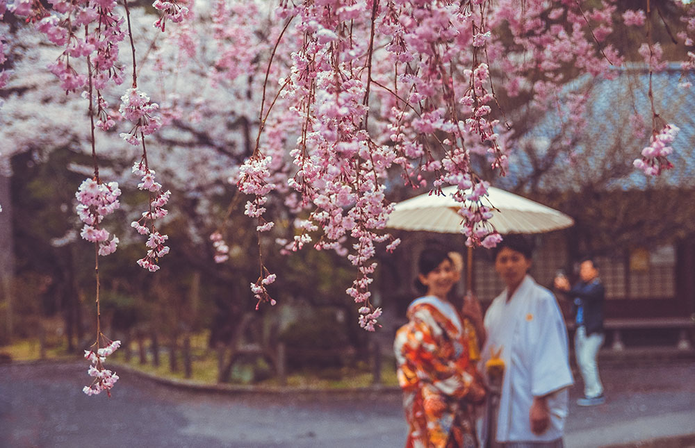 SHINE COUPLE TRADITIONAL SAKURA