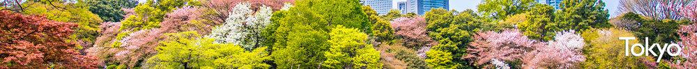 Tokyo+Sakura.jpeg