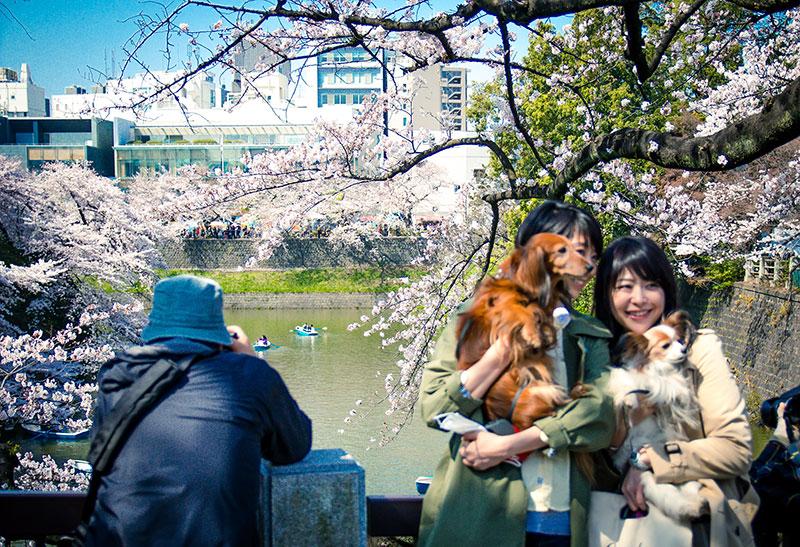 DOGS+AT+PALACE+SAKURA.jpeg