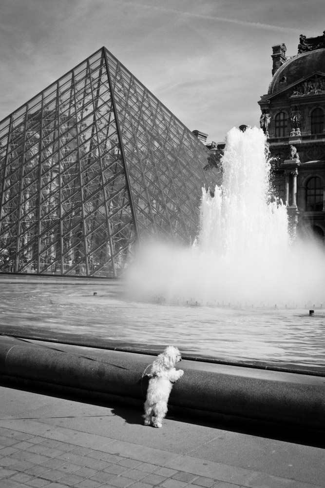©Valérie Jardin - street dogs-1.jpg