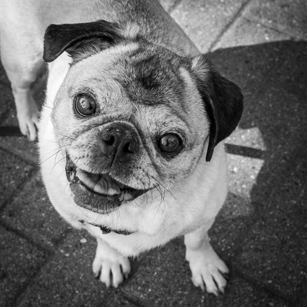 ©Valérie Jardin - street dogs-6.jpg