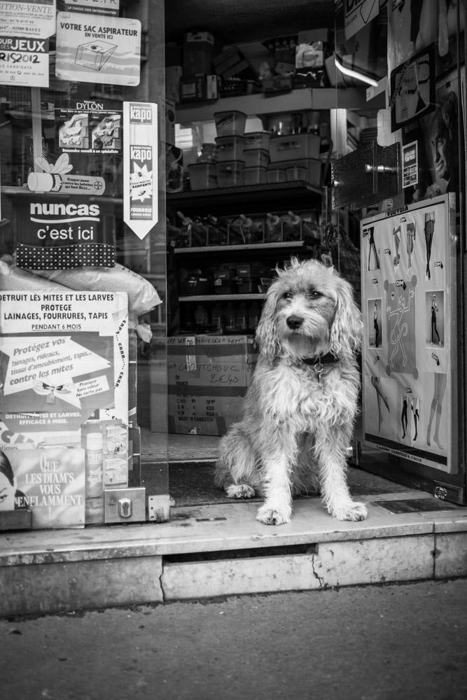 ©Valérie Jardin - street dogs-11.jpg