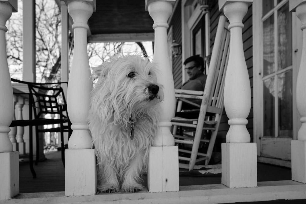 ©Valérie Jardin - street dogs-12.jpg