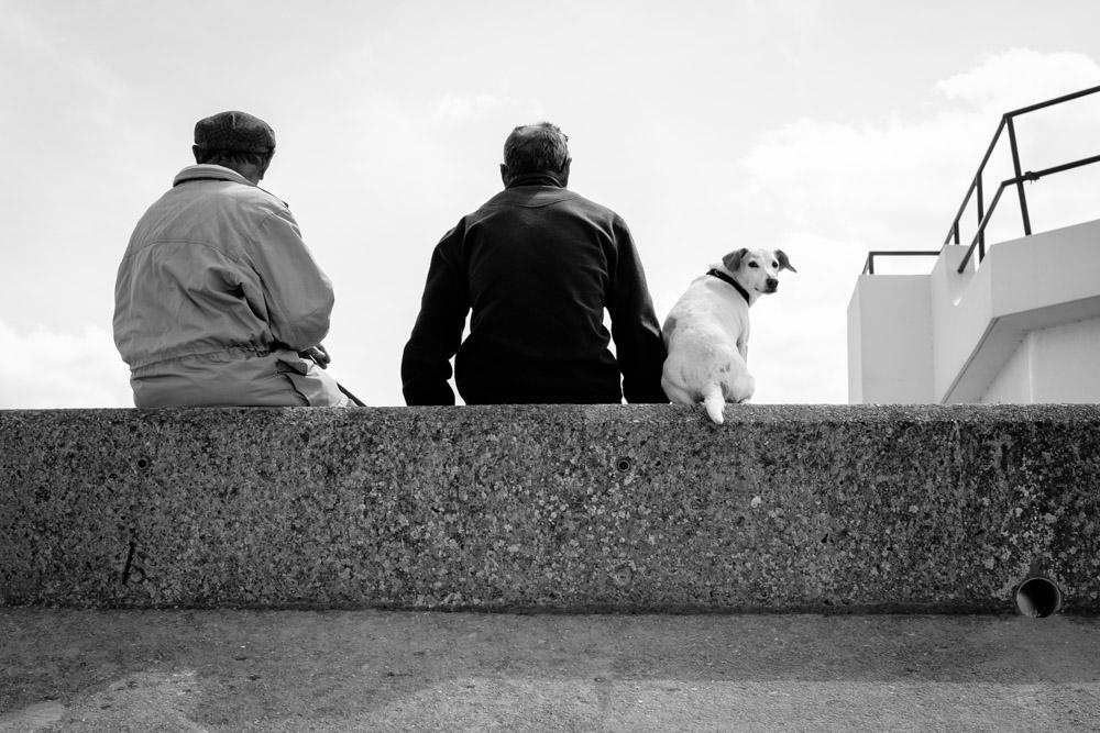 ©Valérie Jardin - street dogs-22.jpg