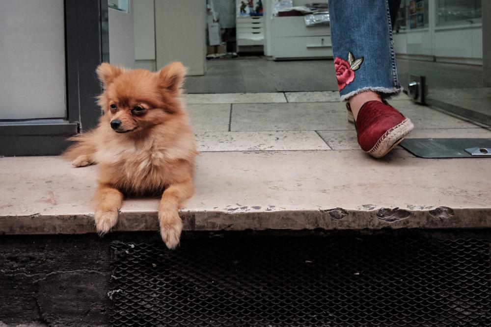 ©Valérie Jardin - street dogs-23.jpg