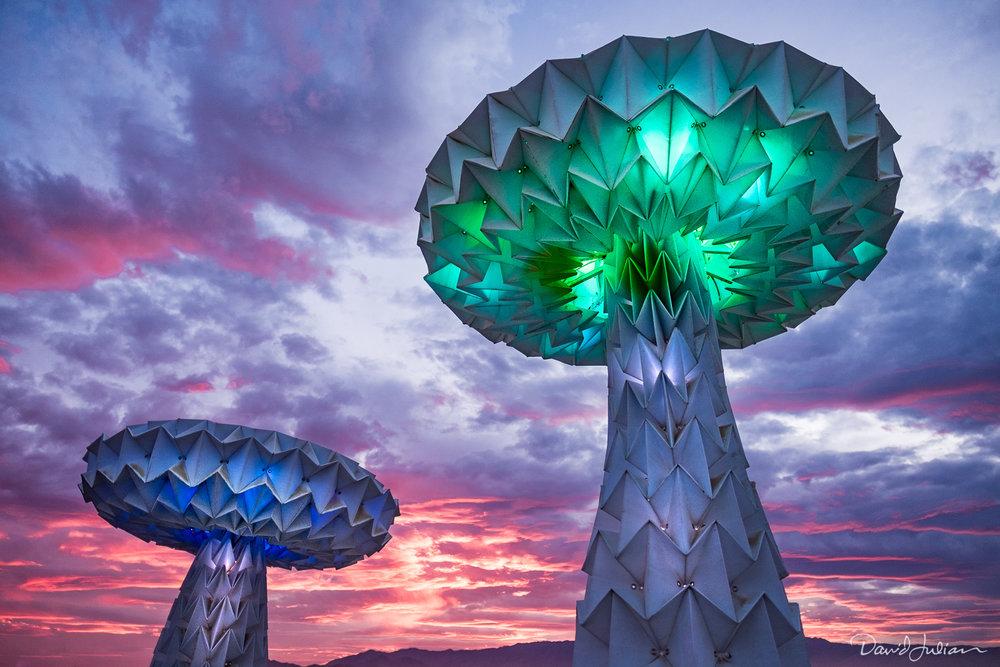 ©David Julian_Burning Man-3497.jpg