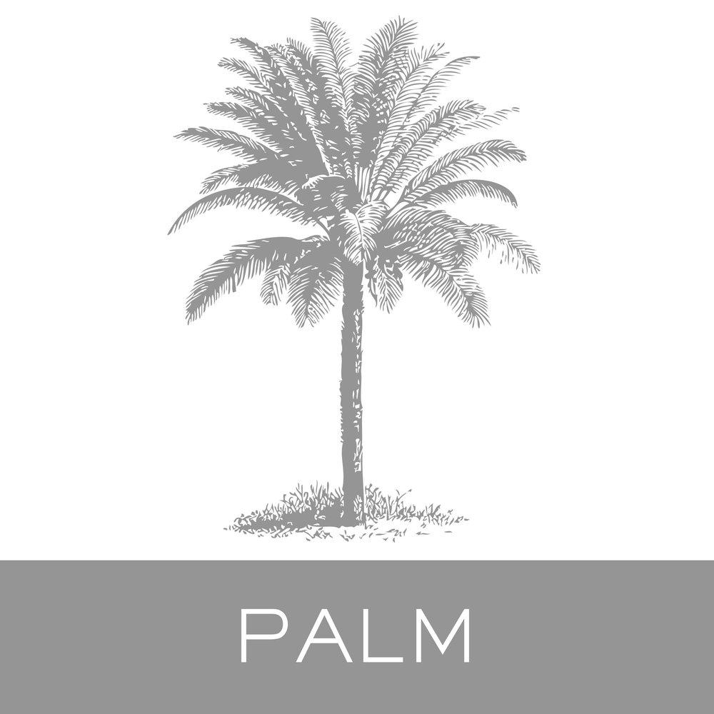 palm.jpg