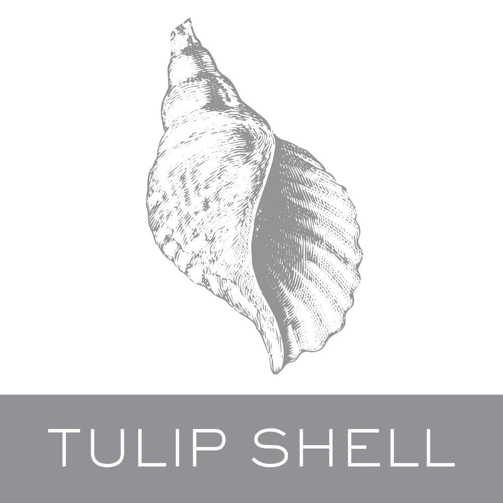 tulipshell.jpg