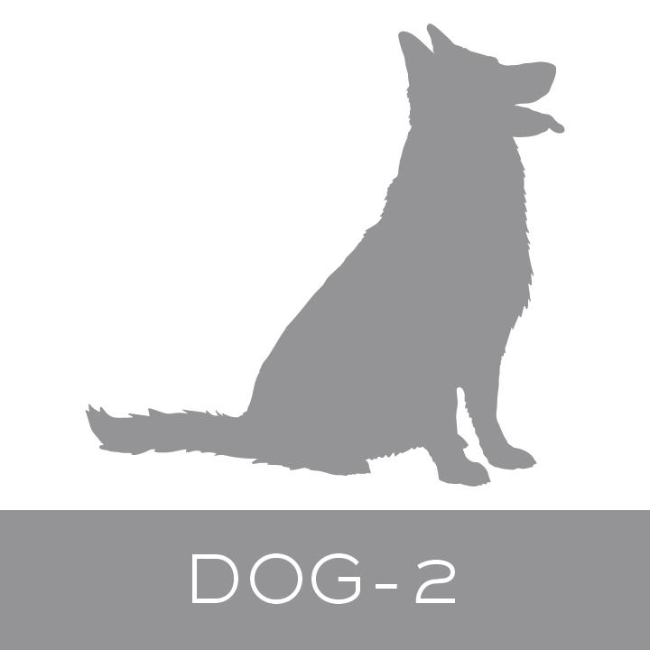 dog-2.jpg