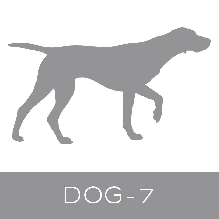dog-7.jpg