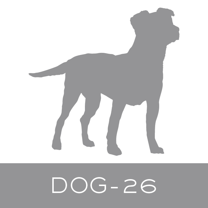 dog-26.jpg