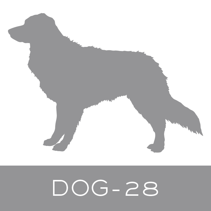 dog-28.jpg