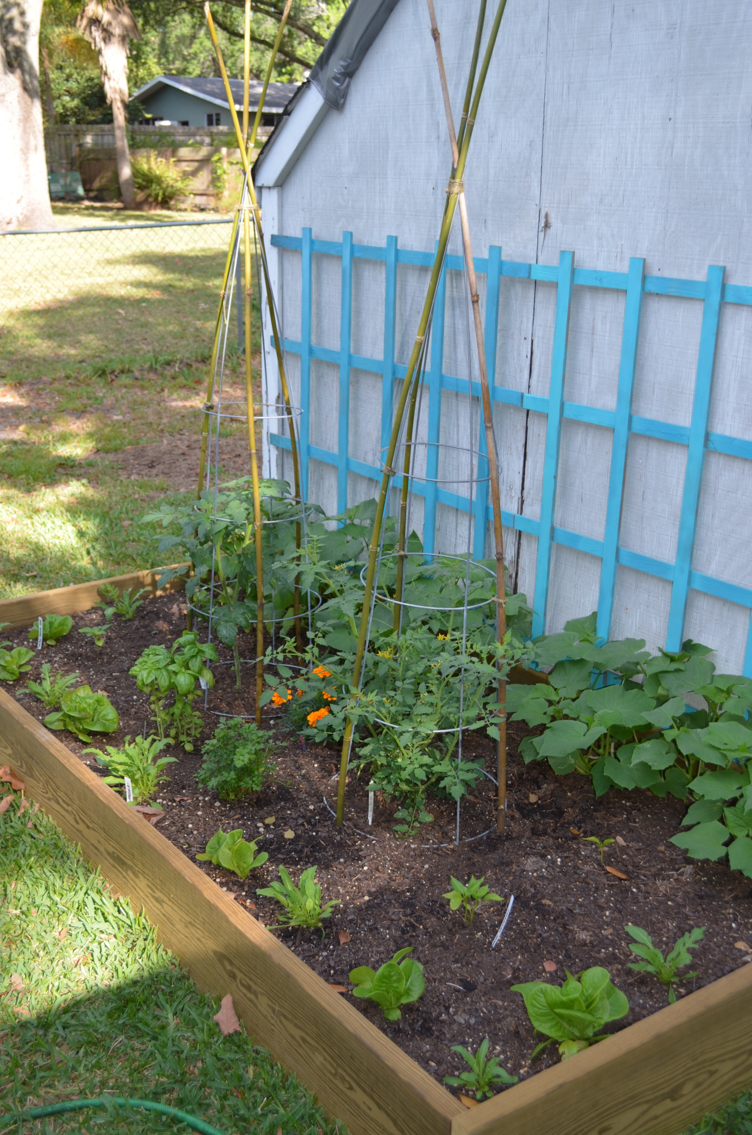Bamboo Garden Stakes Bamboo Tomato Cages Ms Buena Vida