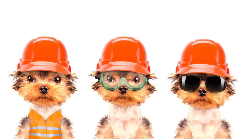 ConstructionDogs.png
