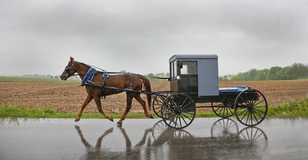 Amish Buggy.jpg