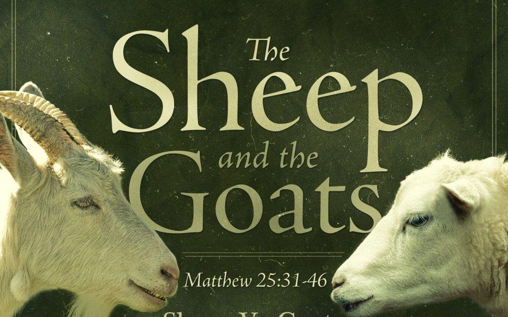 sheepandthegoats-1080x675.jpg