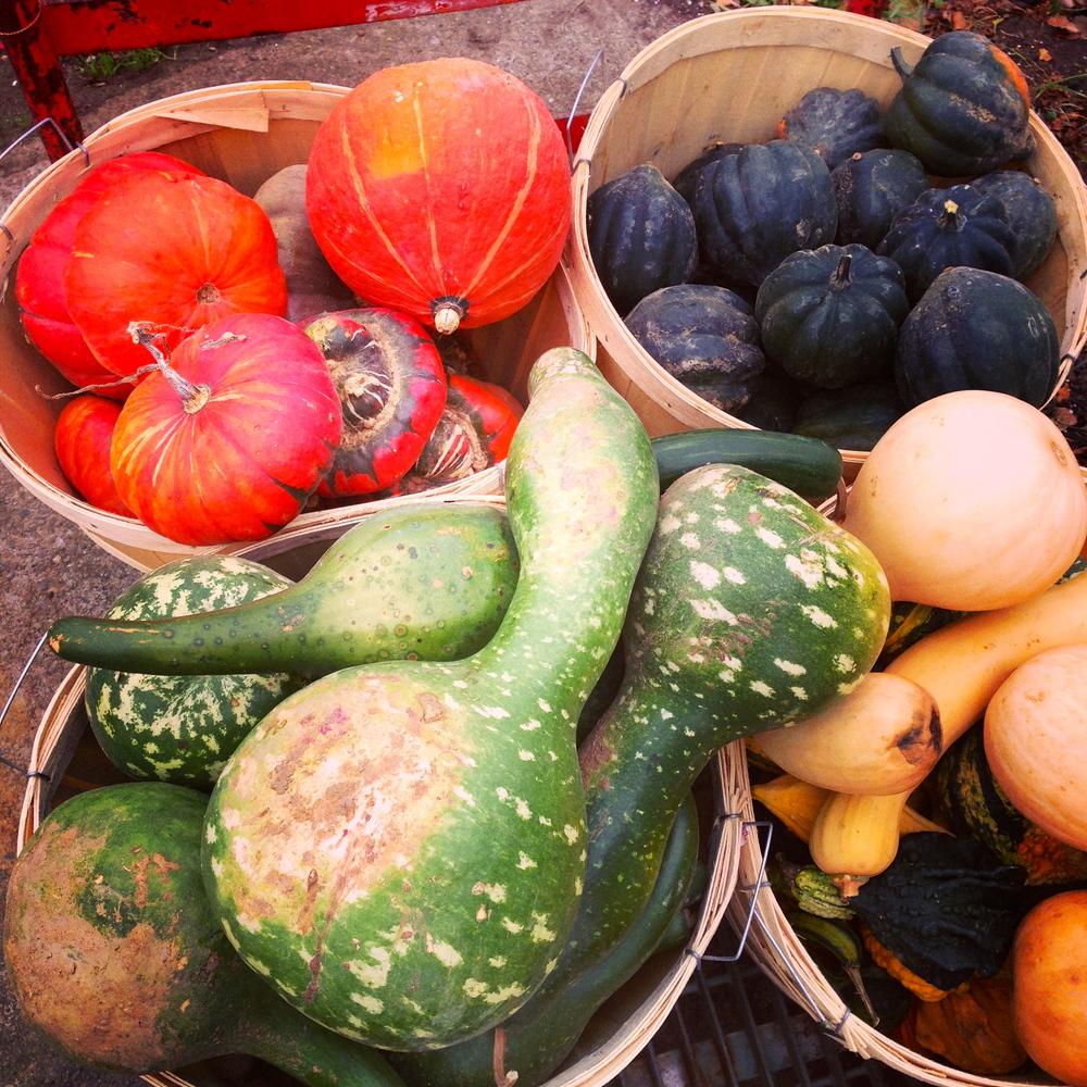Louisa Corbett_Hudson NY_Meisner's Farm_2.JPG