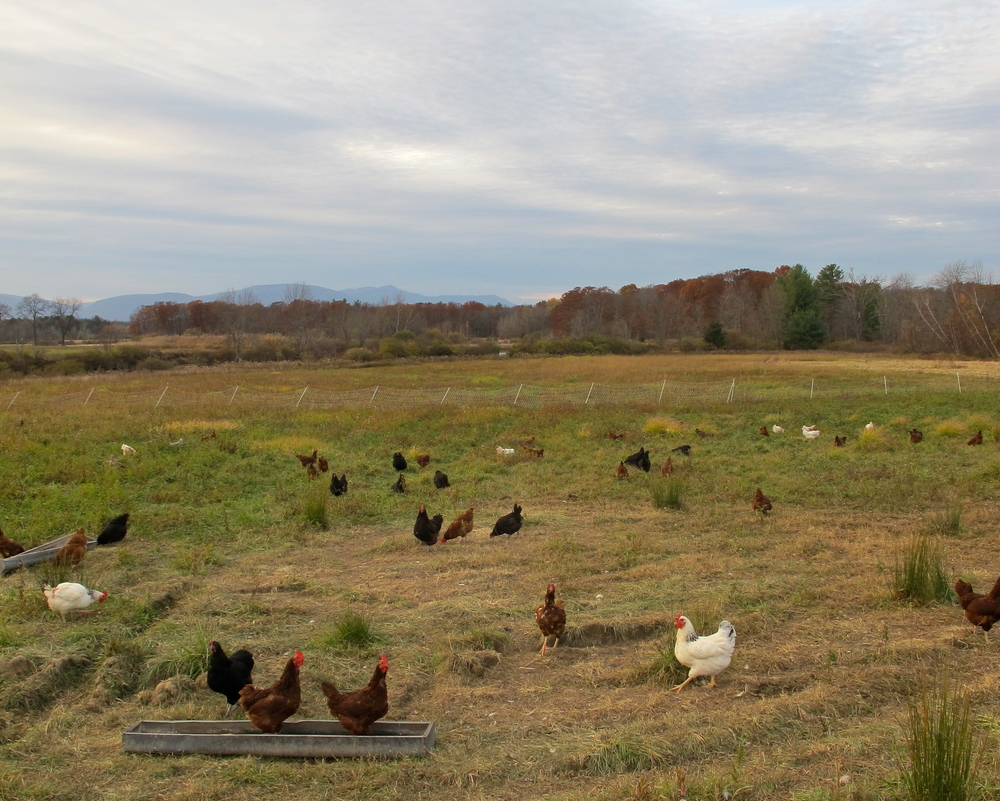 Louisa Corbett_Hudson NY_Sparrow Bush Farm_5_original.jpg
