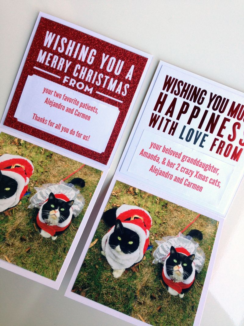 CARDS in an INSTANT™ Kitty-Cat Christmas Cards 2014 | me & my BIG ideas