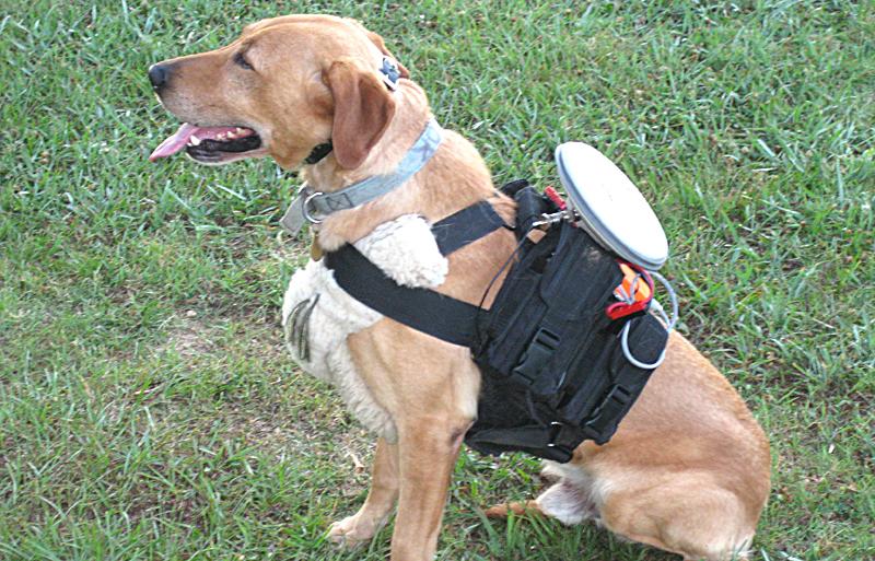 """Canino """"Mayor""""—Uno de caninos guiados autónomamente de la Universidad Auburn; equipado con el sistema de guía"""