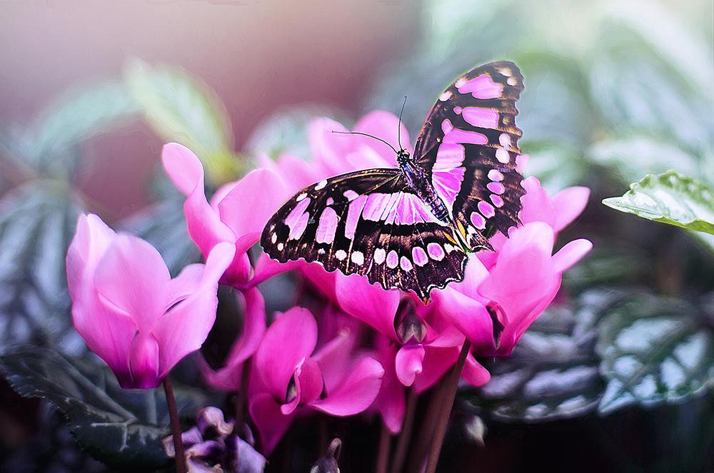 Foto gratis de mariposa rosada en flor rosada