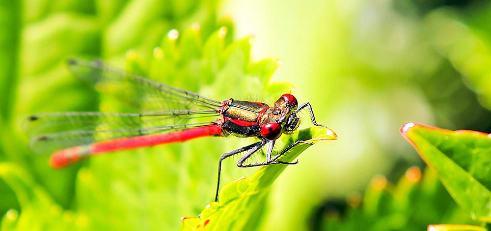 Foto gratis de libélula en hoja
