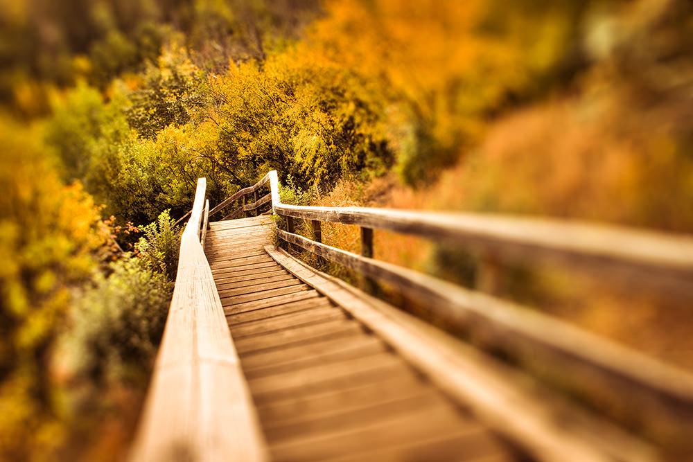Foto gratis de puente en bosque