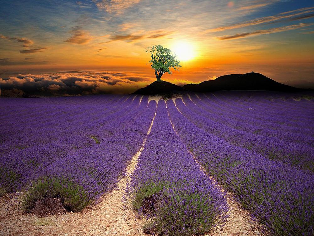 Foto gratis de paisaje y ocaso