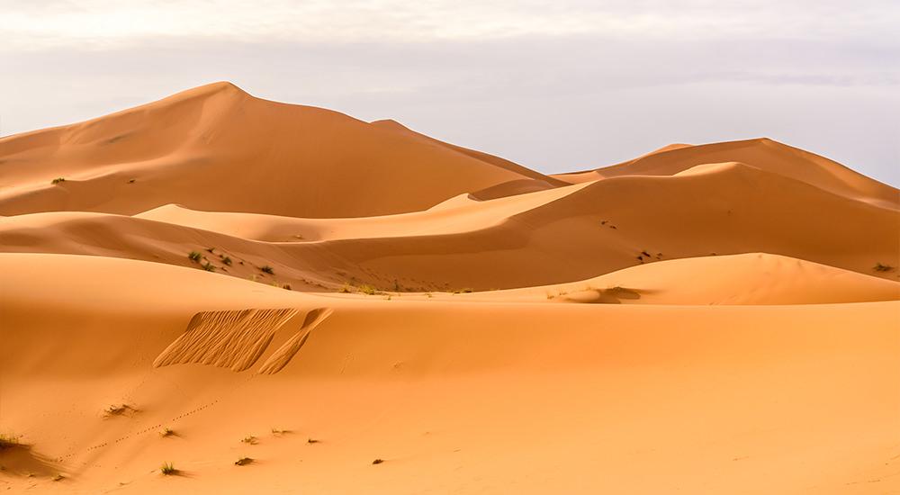 Lecciones del Desierto