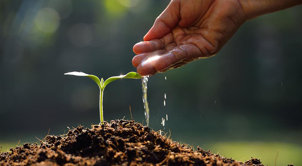 Mateo 13: ¿Qué Tipo de Tierra Es Usted?