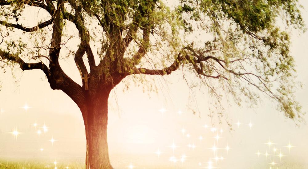Por Qué Creó Dios El árbol De La Ciencia Del Bien Y Del Mal Eb