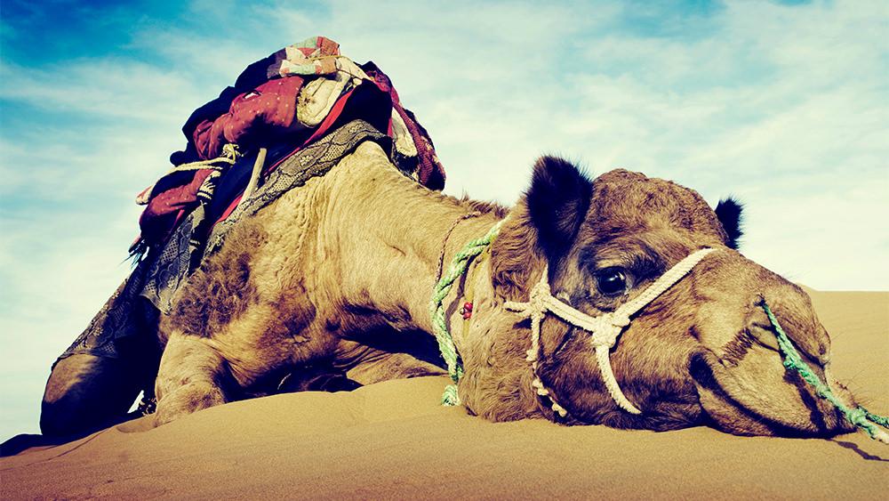 Colar el Mosquito y Tragar el Camello