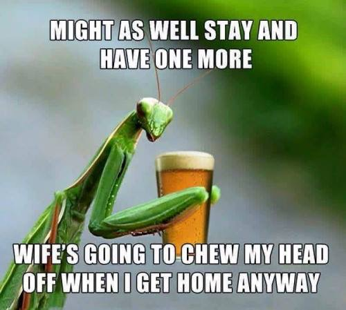 Nagging Mantis Wives