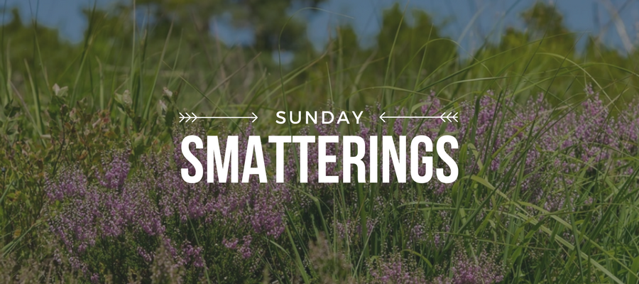 Sunday Smatterings 8.13.17