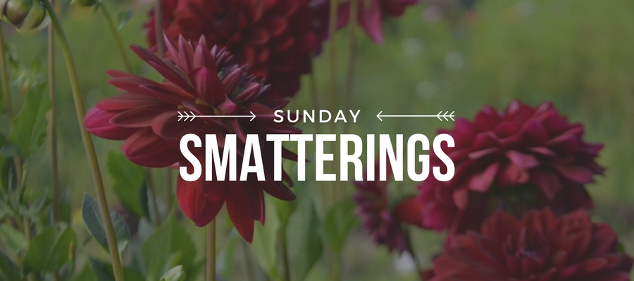 Sunday Smatterings 8.27.17
