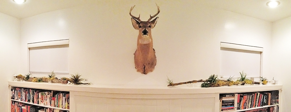our house deer; fritz, is excited for 2013 too!