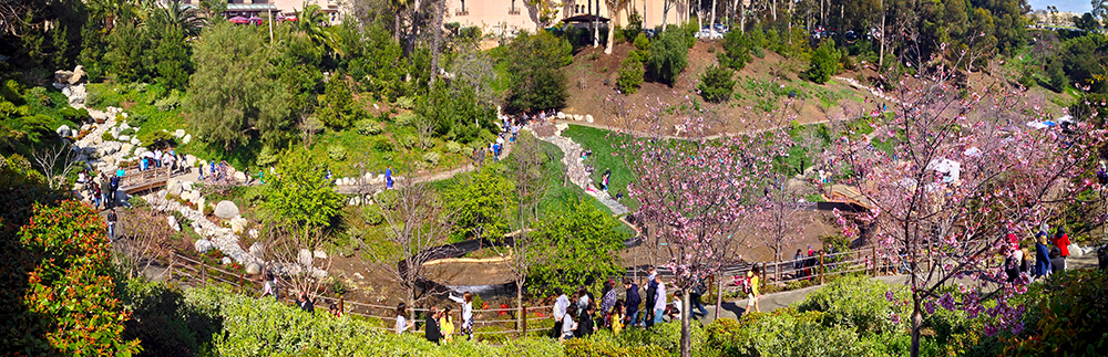 SD Japanese Tea Garden Celebration.jpg