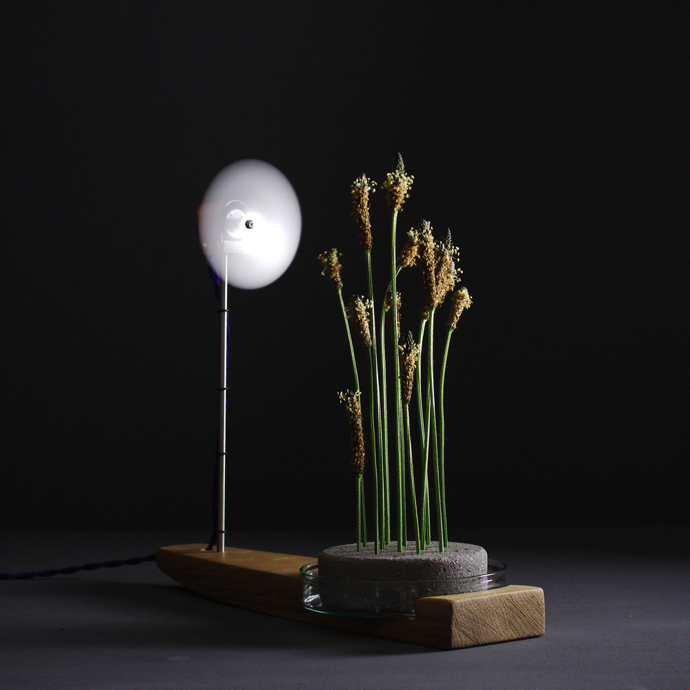 Breeze #2 - fan-assisted vase
