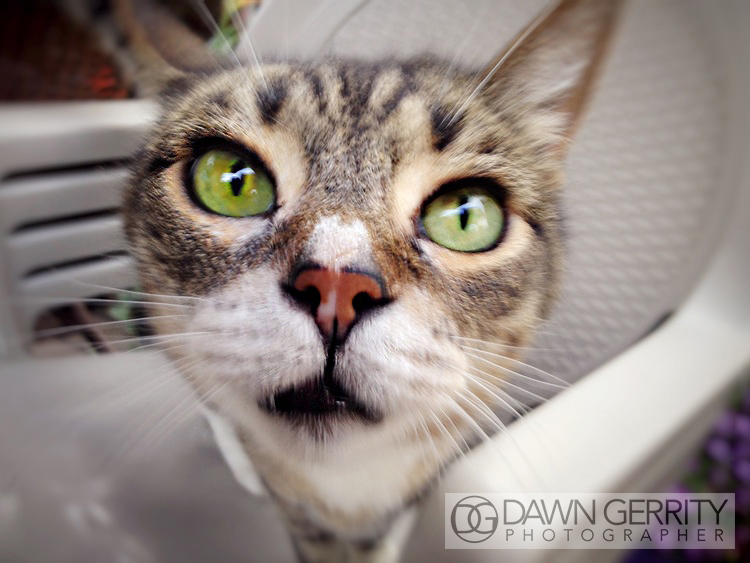 CatPhotographyDawnGerrity.jpg