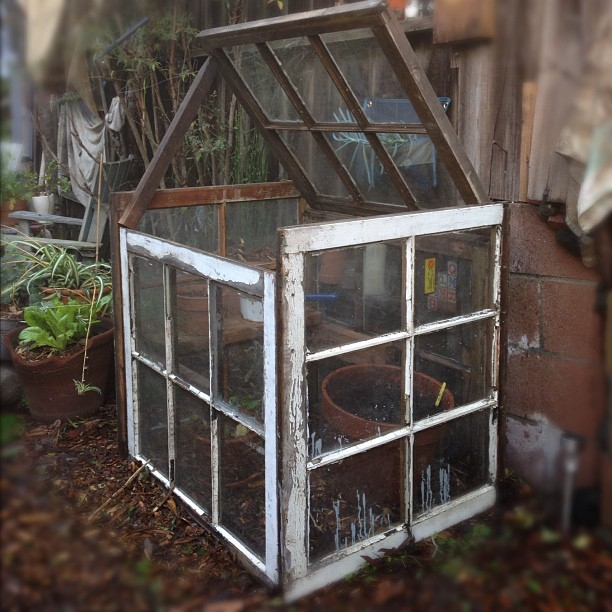 Build a greenhouse day.