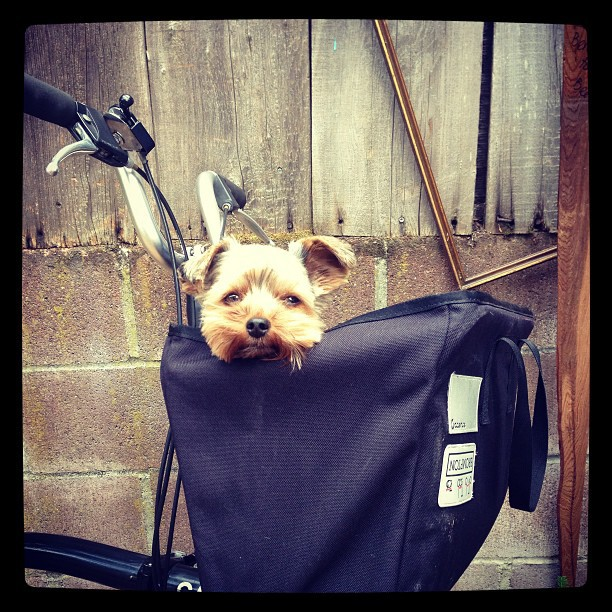 Small // portable                 dog \ bike.