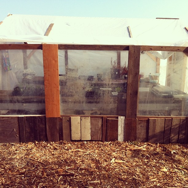 @sadie_serendipity and I got one side of windows done on the #SOGA garden greenhouse.